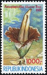 ショクダイオオコンニャク Amorphophallus titanum