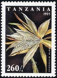 エピフィルム・ダラヒイ Epiphyllum darrahii